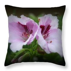 Geranium Throw Pillow featuring the photograph Lovely Geranium Flowers by Kay Novy