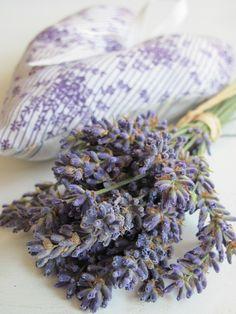 Lavande.*<3* Lavender