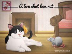 À bon chat bon rat