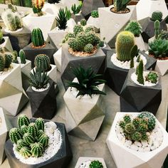 succulents in geometric planters