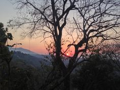 Suchitoto - Casa Palancapa Bed & Breakfast - el arbol de cedro se define muy bien al atardecer. Igual que todas las quebradas parececen dirigirse hacia el volcan Guazapa | suchitoto.tours@gmail.com