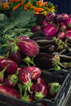 Aubergines come in many varieties. Some types are better suited for various uses. Eggplant Benefits, Better Suited, Eggplants, Recipe Using, Health Benefits, Great Recipes, Good Food, Nutrition, Facts