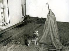 Coyote, Joseph Beuys  Sléttuúlfur - (Ég kann vel við Bandaríkin  og Bandaríkin kunna vel við mig), 1974.