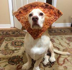 5 bichinhos de estimação que conquistaram nosso coração - Sid, my regal beagle