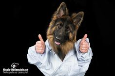 #deutscherschäferhund #hundefotografie #nicolehollenstein