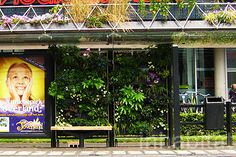Eindhoven's Green Bus Stop