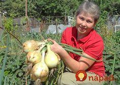Advice on everything gardening Summer House Garden, Home And Garden, Planting Vegetables, Vegetable Garden, Fruit Plants, Small Farm, Farm Gardens, Edible Garden, Garden Planters