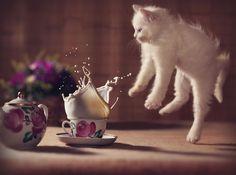 52 magnifiques photos de chats qui sautent   53 superbes photos de chats qui sautent jumping cats 1