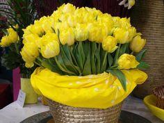 *الزهرة هي الطبيعة الصامتة النابضة بكل ألوان الحياة، ألوان مضيئة تعكس التفاؤل العميق والفرح بالحياة. دمتم تتنسمون عطره ❤️
