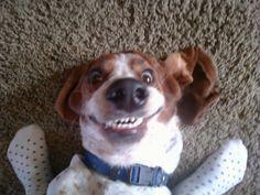 Oh the joys of having a Basset Hound