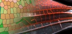 How dragonfly wings get their patterns: New model sheds light on how nature generates diverse patterns -- ScienceDaily Dragonfly Wings, New Model, Art Images, Neon Signs, Sheds, Harvard University, Biology, Patterns, Nature