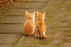 Cat pictures きょうだい