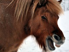talking horse  photos images   talking horse 25 Funny Horse Pictures Which Will Make You Laugh