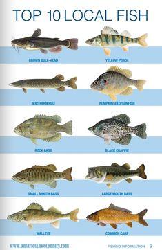 fishing tips chart - Fishing Tank - Ideas of Fishing Tank - fishing tips chart Bass Fishing Shirts Idea Crappie Fishing Tips, Trout Fishing, Kayak Fishing, Fishing Knots, Fishing Tackle, Fishing Ontario, Bass Fishing Shirts, Fishing Stuff, Fish Chart