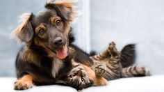 The cute dog and cat