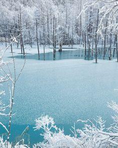 青い池/薄雪の青い池 Beautiful Moments, Beautiful Places, Deep Forest, Nature Plants, Japan Photo, Snow Scenes, Winter Trees, Aesthetic Photo, Scenery