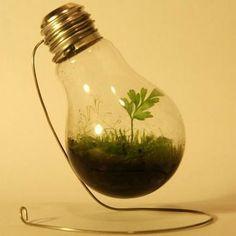 """Das DIY Gadget-Blog hat eine interessante Verwendung für kaputte Glühbirnen gefunden: das Mini-Treibhaus.  Dafür werden eine Pflanze, etwas Erde und etwas Wasser in die entkernte Glühbirne gepackt und diese dann luftdicht verschlossen. Durch die passenden Mengen von Licht und Wärme entsteht so ein eigenes Ökosystem, indem Wasser verdampft und am Glas wieder kondensiert, so dass """"Regen"""" entst ..."""