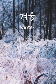 겨울 (gyeoul) Winter