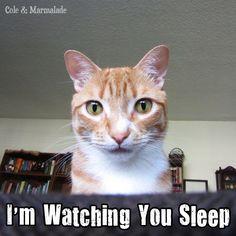 #catstalker http://coleandmarmalade.com