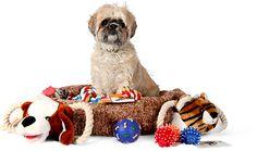 Petzlife Brasil produtos naturais para Pets