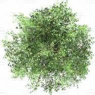 ผลการค้นหารูปภาพสำหรับ shrub top view