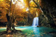 Los 13bosques más bellos del mundo según laNational Geographic