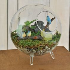 "5 1/2"" Footed Glass Terrarium is a cute container that a fun miniature garden can be made.  These are great gifts to give someone."