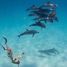 Swimming with wild dolphins in the #Bahamas for #WildlifeWednesday! @brentdurand