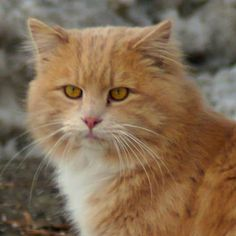 Carmel (stay cat)