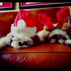 sleepy christmas puppies.
