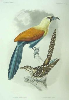 http://library.sc.edu/spcoll/audubon/case10Cassin.jpg