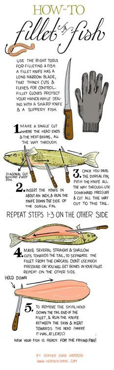Cooking Tip: How to Fillet a Fish.  I'm sure I'll need this one of these days.