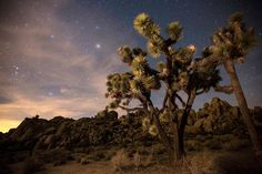 The strangely shaped Joshua Trees and the starry spectacle of the clear night sky make for awe-inspiring visits to Joshua Tree National Park © Brad Goldpaint / Getty Images