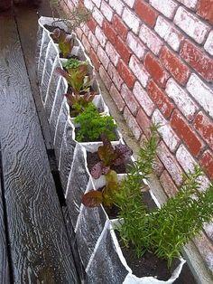 Shoe organizer as a planter.
