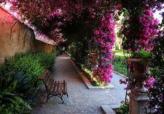 Valencia, Jardin de Monforte | por Leon Match