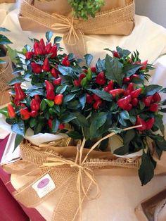 Centro tavola: piante di #peperoncino