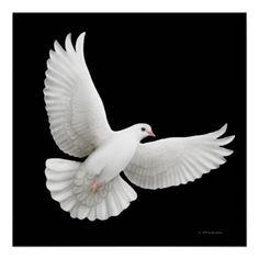 flying_white_dove_print-re87c265323e24d71a9b42b2fc09afd07_w2q_8byvr_512.jpg (512×512)