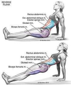 There is a post on daily health post from June that explains what is a reverse plank and how it | Infographics Directory