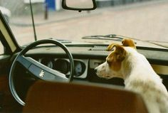 Who's driving? #dogs