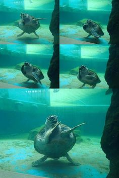 I'm tellin' ya, them turtles got the moves :D