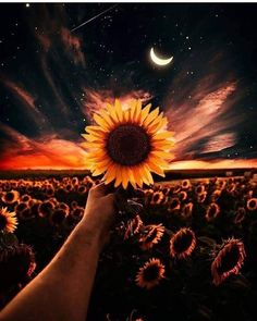 Sunflower wallpaper by - - Free on ZEDGE™ Tumblr Wallpaper, Cute Wallpaper Backgrounds, Galaxy Wallpaper, Nature Wallpaper, Cute Wallpapers, Landscape Wallpaper, Aesthetic Backgrounds, Aesthetic Iphone Wallpaper, Aesthetic Wallpapers