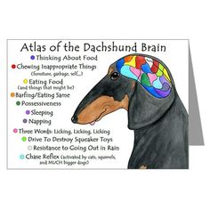 This is a doxie for sure!  Finally someone took the time to spell it out!