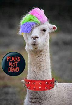 Lama Lama, Llama Pictures, Punks Not Dead, Cute Baby Animals, Cute Babies, Lily, Llamas, Funny, Artwork