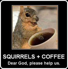 Squirrels & Coffee