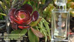 Essens parfémy a kosmetika pro muže - https://www.linkedin.com/pulse/essens-parf%C3%A9my-kosmetika-pro-mu%C5%BEe-sarka-ksandrova