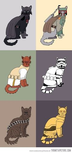 May the cats be with you…