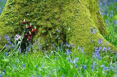 Bluebells in the Royal Forest of Dean by brasher fan, Mark Weyman