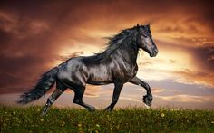 Winter is the time we confront the shadow aspect of the self often referred to as the dark horse.