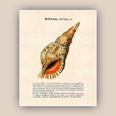 Seashell Print Vintage triton image print Dictionary by AlgaNet, $13.50