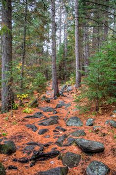Rocky Path - A rocky pathway through a pine forest in Algonquin Provincial park in HDR